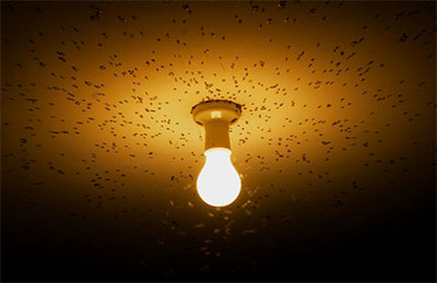 Por que os insetos são atraídos pelas lâmpadas?